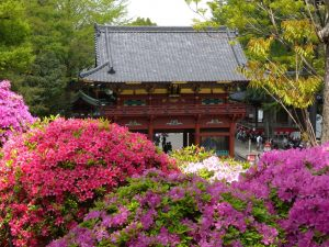 Nezu Shrine: power spot in Tokyo famous for a beautiful architecture and azalea